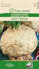 Selerijas sakne Giant Prague