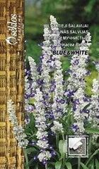 Miltainā salvija Blue&White