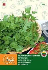 Pētersīļi /Parsley/ Gigante D'Italia, ASEJA, 3 g, 24640 (2)