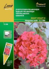 Svītrainās pelargonijas Night Violet H
