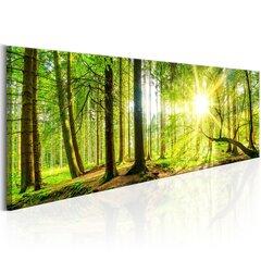 Glezna - Majestic Trees cena un informācija | Gleznas | 220.lv